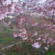 古都の春を撮りました(友人投稿)