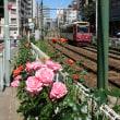 都電荒川線&大塚バラ祭り!