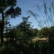 б 自然の中でイキイキしてる、コゲラの姿、ドキドキ眺め б KK楽園(岐阜県各務原市)