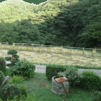 我が家の稲刈