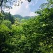 川苔山  百尋ノ滝を観てきましたよ〜