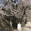 """桜満開 """"姫路城 龍野城 鳥取城跡"""""""