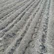 雑草は貴重な有機堆肥。