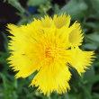 「魁ピーマン」を蒔種、「飛紅船」苗・「紅大」苗の移植、スイカ苗(「紅小玉」・「大玉」)の植え付け