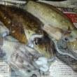 【食】マルイカ・スミイカの刺身