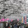 浅草界隈の満開の桜