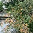 京都歩いています。