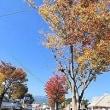 秋晴れ続く/作品を引き取りに柳川へ