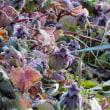 ウメの開花進む / 植物誌