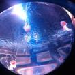 ☆サンシャイン水族館行ってきました~(^◇^)