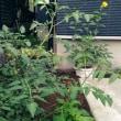 猛暑向き庭?
