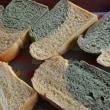 1日2回の天然酵母パン教室でおいしい香り溢れる午後の森。