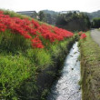 山田錦の里の秋景色