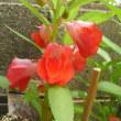 廻るもの 夏の花2