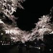 観桜会にて