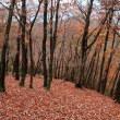 若菜林道から明延山