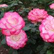 【京都園芸倶楽部Facebook】先週の植物(2017年10月15日~21日)