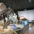 那須野が原博物館で恐竜展をみてきました。
