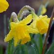 春雨じゃ~~!
