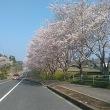 お花見日和&睦沢の平安仏。