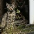 ご近所の猫たち