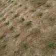 公園の芝生化