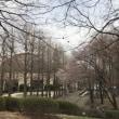 駅前公園で賛美 🌸 2018年3月24日