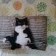 猫枕カバー