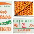 丸かじりが美味しい☆完熟きんかん3キロ☆鹿児島県垂水市