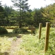白駒池・長野県