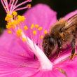 ドイツ(Germany 🇩🇪):  glyphosate may be killing honeybees