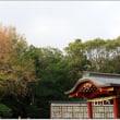 鶴岡八幡宮のイチョウ&源氏池の蓮