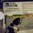 キャバリア「まる」が行く~2018GW旅行記11(福井勝山・恐竜編)