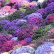 根津神社のツツジ祭り