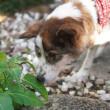 河川敷のホームレス犬「ジロー」