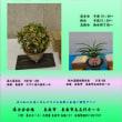 大阪南部富貴蘭会春季展示会