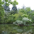 探索を終えて 雲場池の春紅葉