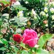 Diary:僕の庭に花が咲くころ。