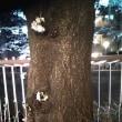 3月24日土曜日…目黒川夜桜