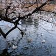 上野不忍池散策