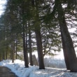 冬の散歩道。(2/20*火)