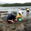 鳥羽竜化石現場で化石採集会の開催