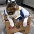 新世界のネコ