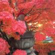 三徳山も素晴らしい紅葉を楽しめると思います。