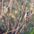 神代植物公園の野鳥たち~♪