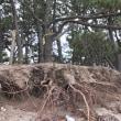 台風被害/早急な対応を