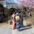 中山のおひなまつり和服姿の同行写真