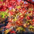 🍁京都の紅葉でリラックス🍁
