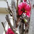 春爛漫!?