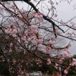 催花雨(さいかう)(^_^)v
